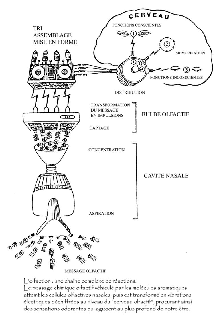 Cosmétique Cenaco - Comment ça marche